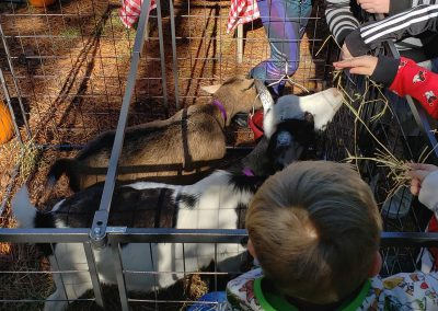 Stand Firm Farm Goats